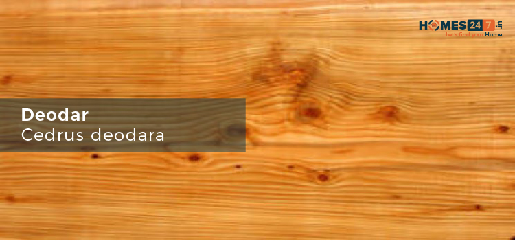 Deodar Wood - Types of Wood Used for Furniture