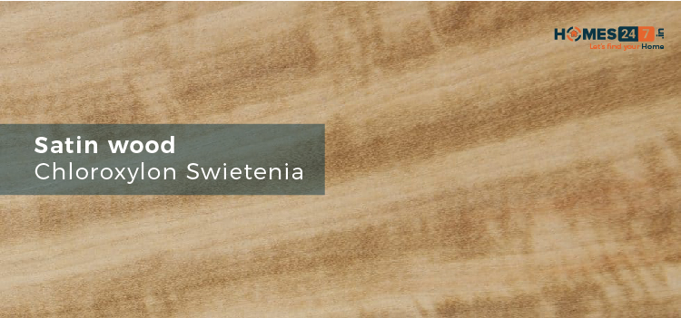 Satin Wood - Types of Wood Used for Furniture