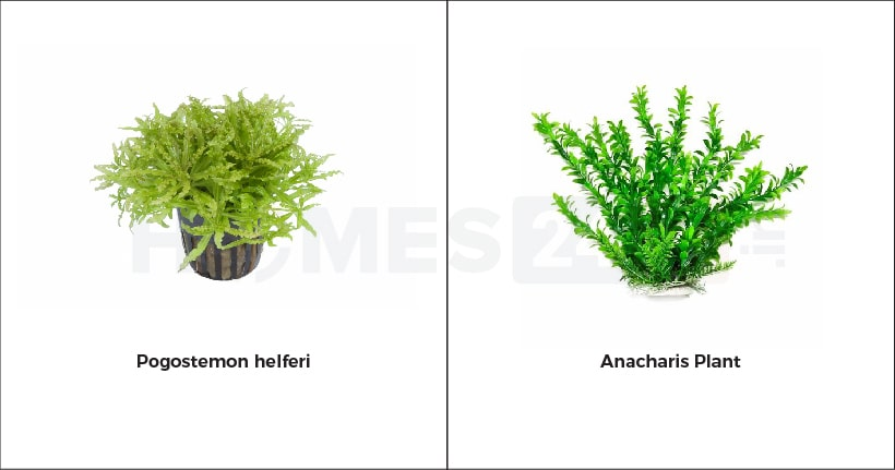 aquarium plants for home