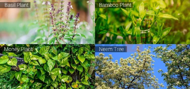 vastu-plants-01