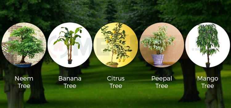 Various kinds of vastu trees for home