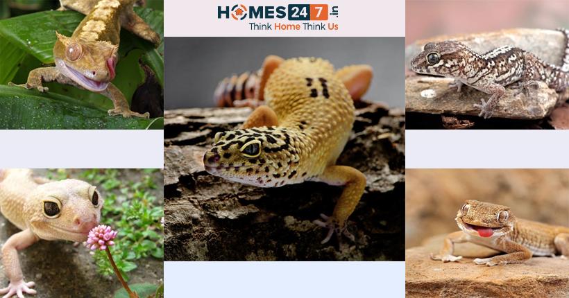 Types of Pet Reptiles
